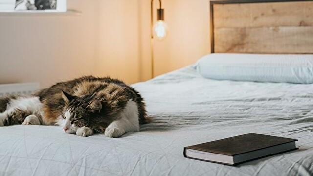 寝る前のリラックス方法/僕がおこなっている3つ【睡眠の質を高める】
